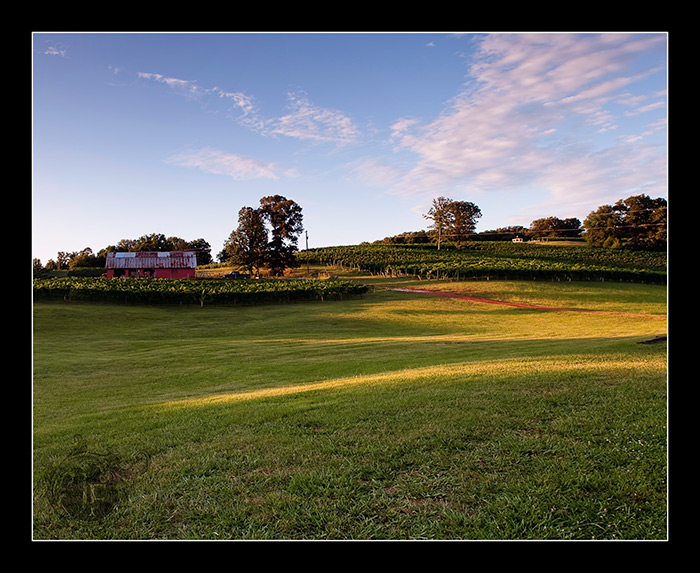 A beautiful shot of the vineyard in the early evening sun just after the ceremony. (Steve Glass - Nikon D700)